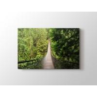 Orman içinde Köprü